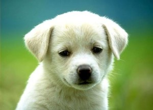 Діти рідше хворіють, якщо в будинку є собака