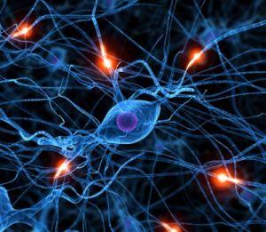 Вчені виявили схожість у принципах розвитку Всесвіту, мозку та соцмереж