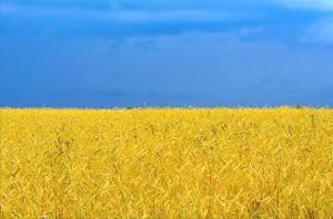 Україна і Кенія - останні у рейтингу країн, в яких краще народитися у 2013-ому році