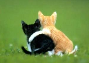 Дружба покращує стан здоров'я