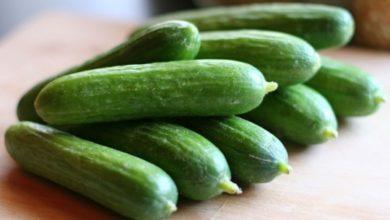 Photo of Огірок – один з найкорисніших продуктів, вважають дієтологи