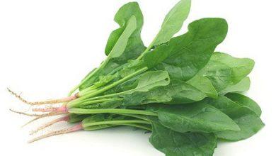 Photo of Відкриття: овочі рятують від втрати пам'яті