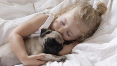Photo of Дітям більше подобається поводити час з домашніми тваринами, ніж з братами і сестрами
