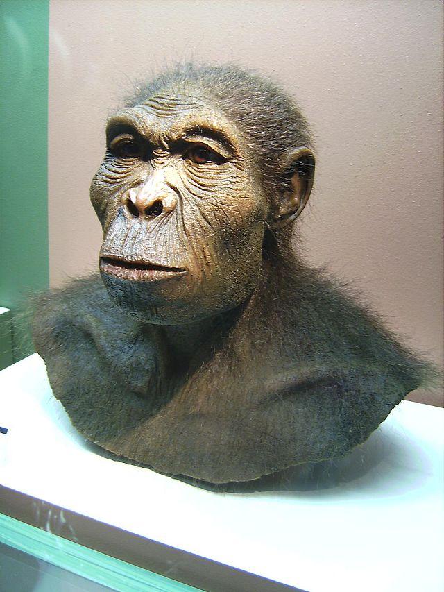 Реконструкція Homo habilis (Людина уміла)