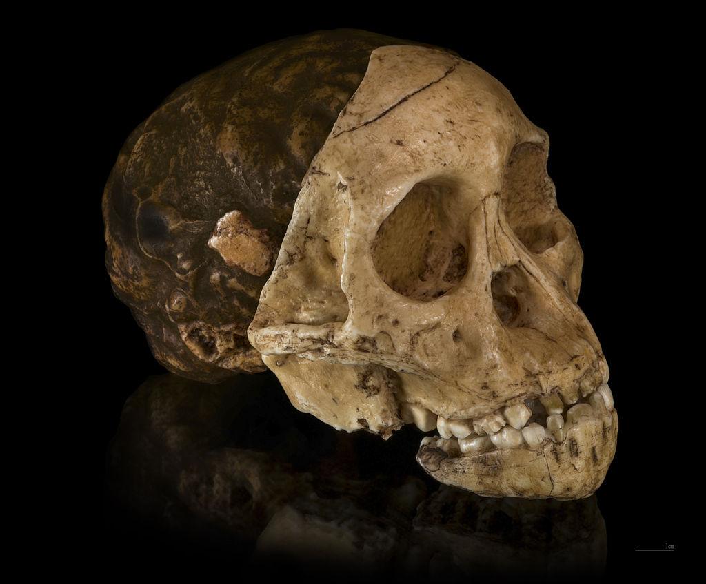 Реконструкція черепа таунгуського немовля