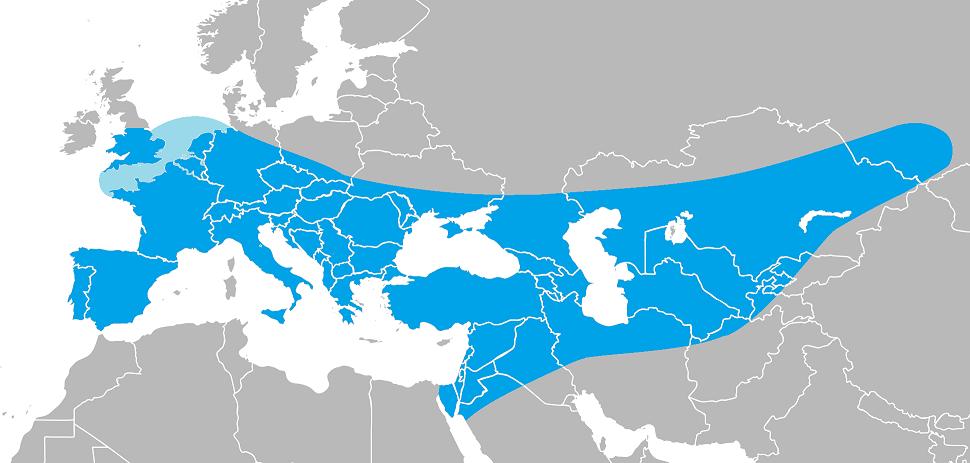 Розповсюдження неандертальця