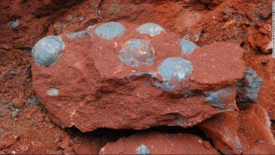 Photo of Будівельники знайшли найбільшу колекцію яєць динозаврів