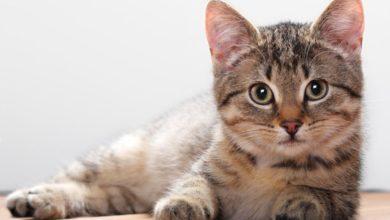 Photo of Відео з котами зміцнюють психічне здоров'я, показало дослідження