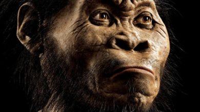 Photo of Вчені з'ясували, як виглядала прадавня людина