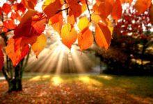Photo of Сценарій свята «Золота осінь» (1-4 класи)