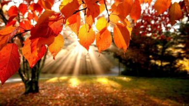 Photo of Осінь щедра, осінь мила  (Сценарії виховних заходів  для учнів 1-4 класів)